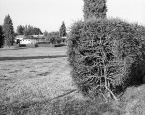 34 Hedge-Entrance