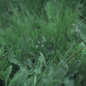 04 Weeds-croppped1